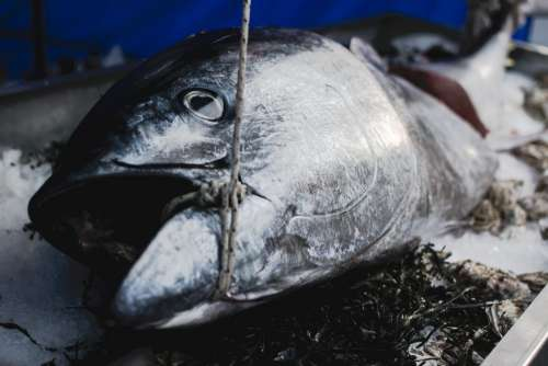 Tuna at a market