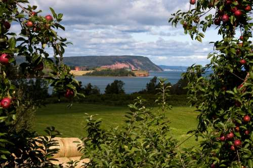 Apple Orchard and Landscape in Nova Scotia, Canada free photo