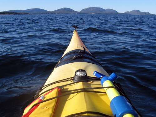 Canoeing on the waters of Acadia National Park, Maine free photo