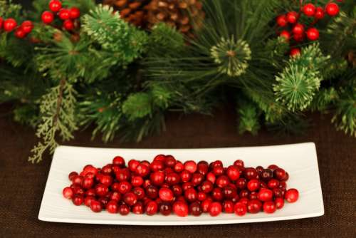 Cranberries on a plate free photo