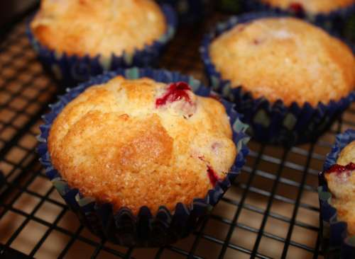 Cranberry Muffins Pastery free photo