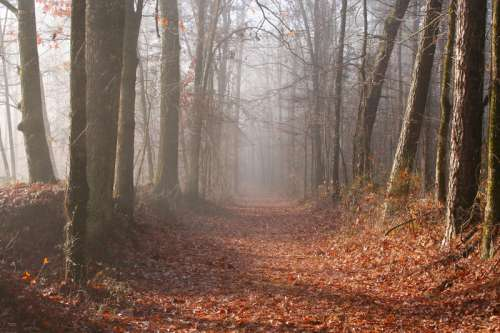 Foggy Woods in Mississippi free photo