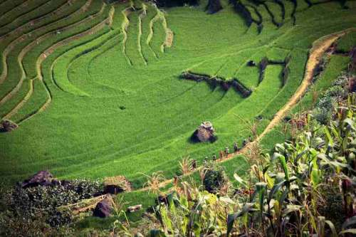Terrace and farms in Vietnam free photo