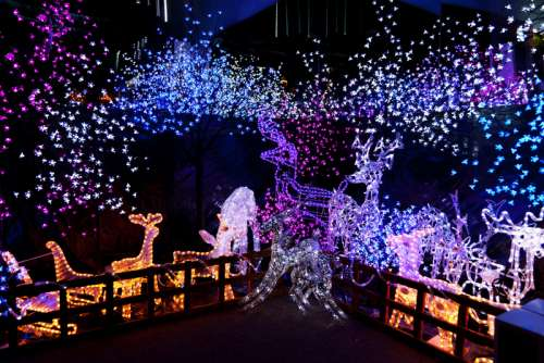 Lights and Christmas Decorations with animals and tree lights free photo