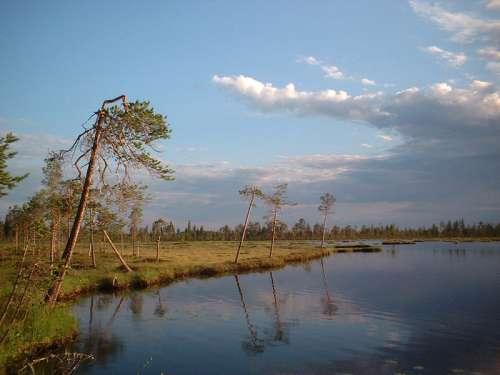 Marshland near Liikasenvaara in Kuusamo, Finland free photo