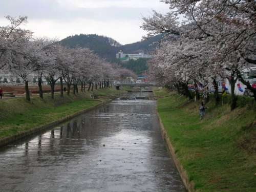 Mojeoncheon River and Trees in Mungyeong, South Korea free photo