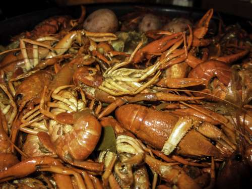 Red Crawfish Dinner in New Orleans, Louisiana free photo