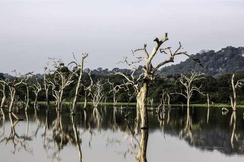 Trees in the lake landscape in Sri Lanka free photo