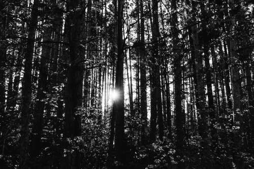 forest sunset adventure