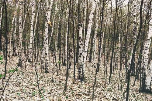 Forest michigan