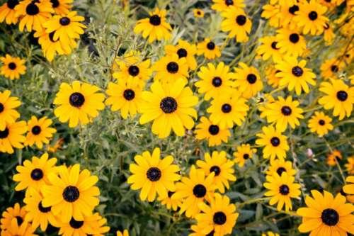 Beautiful yellow flowers on meadow in summer