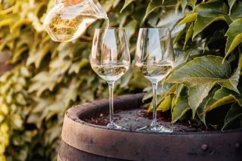 Wine barrel with two glasses of white wine by vineyard