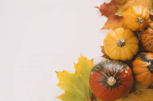Pumpkins on white background with the autumn leaves