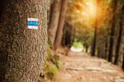 Touristic sign on tree next to touristic path