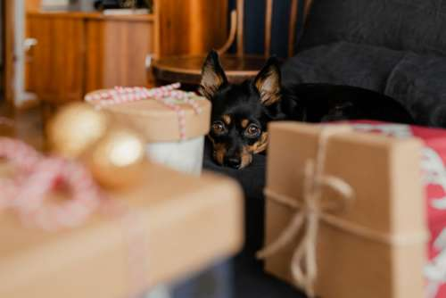 Christmas gifts for a cute little dog