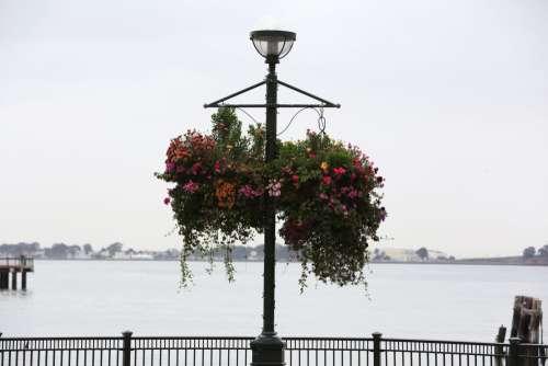Flowery Street Lamp