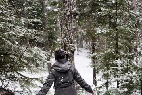 Walking in Winter Forest