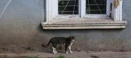 Cat of the Ukraine