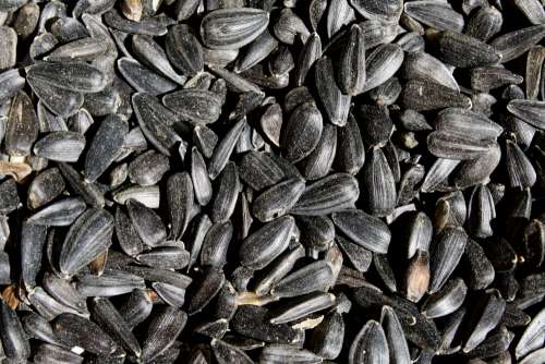 Black Sunflower Seeds Close Up