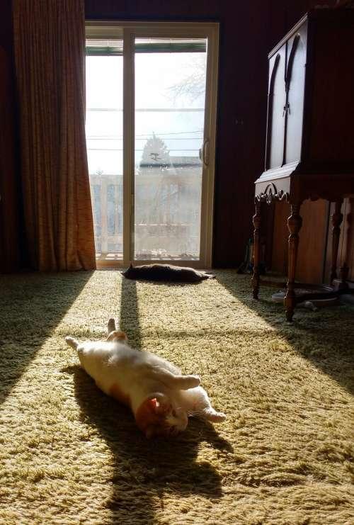 Cats Lounging in a Sunbeam