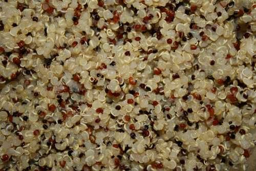 Cooked Tri-Color Quinoa Closeup Texture