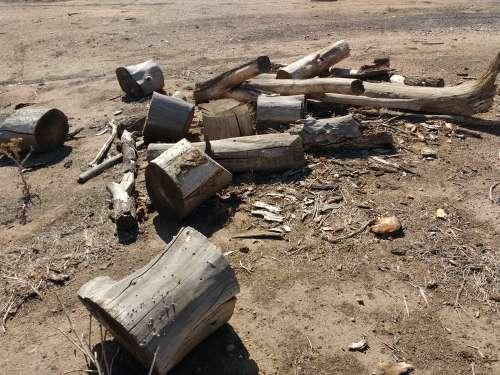 Cut Logs from Fallen Tree