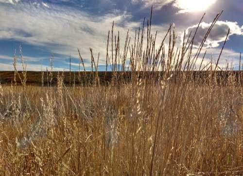 Dry Fall Prairie Grass Close Up