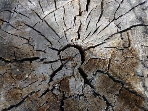 End of Old Wooden Stump
