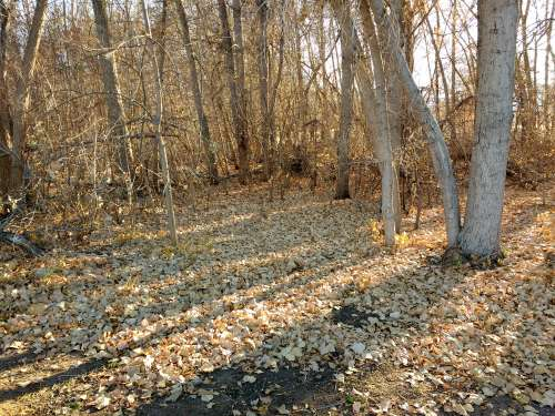 Grove of Trees in Late Fall