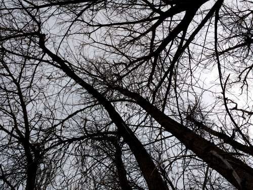 Leafless Tree Branches from Below