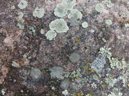 Lichen on Rock Face
