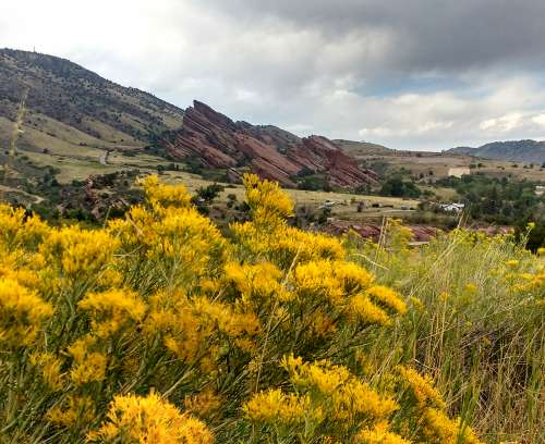 Red Rocks Park with Yellow Rabbitbrush