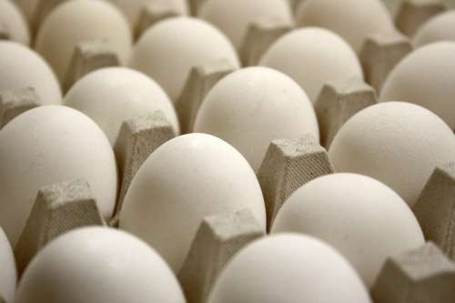 Tray of Eggs Close Up