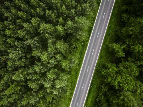 Aerial View of a Lonely Road in the Woods