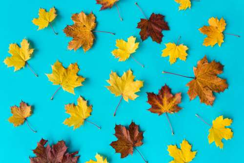 Autumn Leaves on Flat Blue Background #2