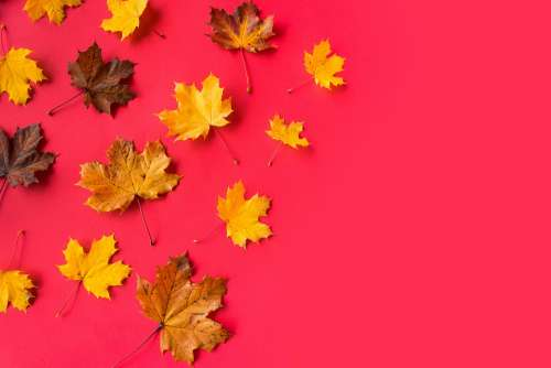 Autumn Leaves on Flat Red Background with Room for Text