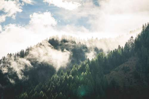 Beautiful Morning Mountain Forest Scenery