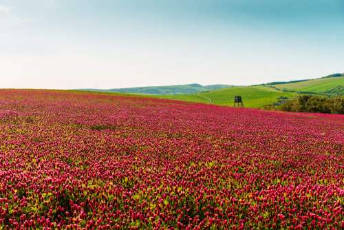 Colorful Fields of Gymnadenia with Raised Hide