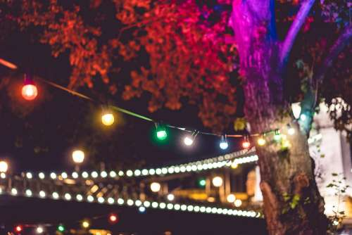Colorful Lights on Night Garden Party
