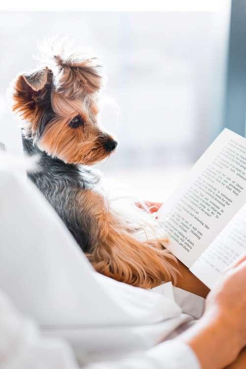 Cute Dog Reading a Book