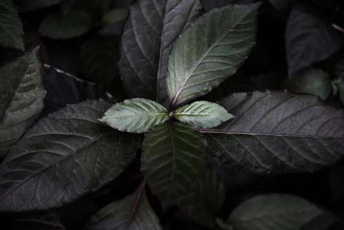 Dark Leaves Background
