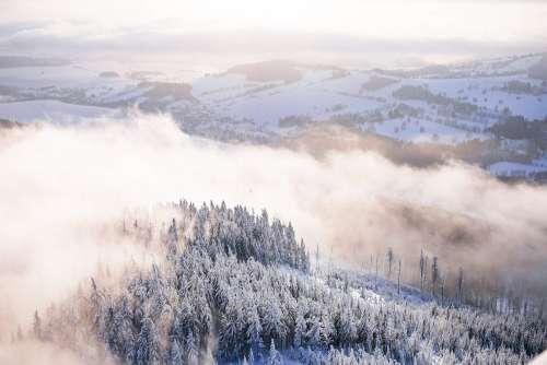 Fog In Snowy Forest Winter Scenery