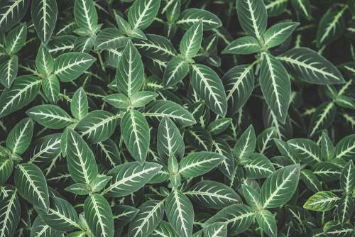 Green Leaves with White Lines Pattern Background