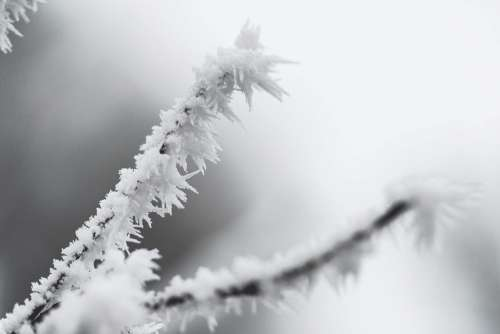 Ice Hoarfrost on a Branch