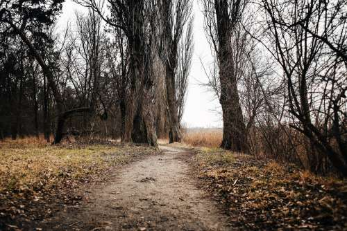 Lakeside Autumn/Winter Path