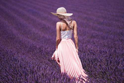 Lavender Field and Beautiful Woman