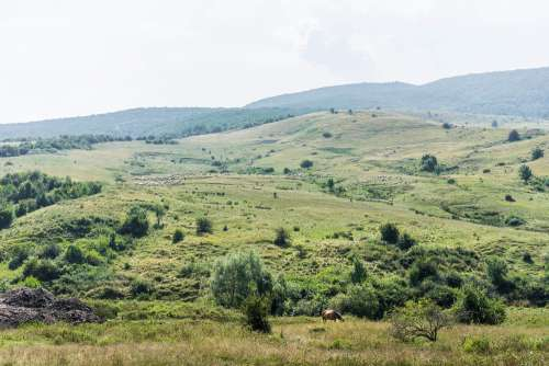 Romanian Nature with Horse and Flock of Sheep
