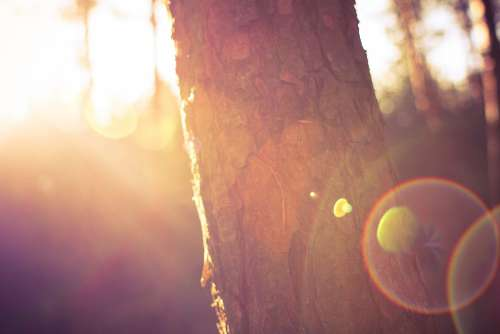 Tree in Morning Sunlights