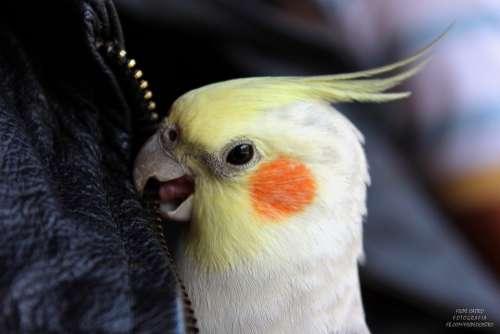 Parrot Ara Exotic Bird Beak