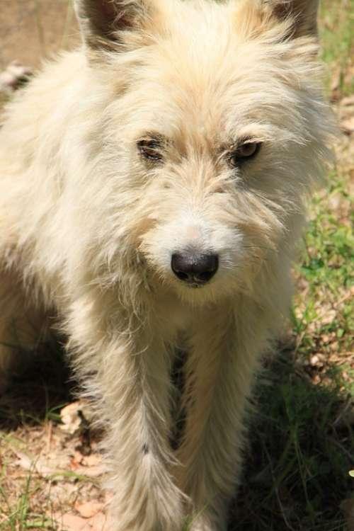 Abandoned Dogs Mad Sad Stray Animals